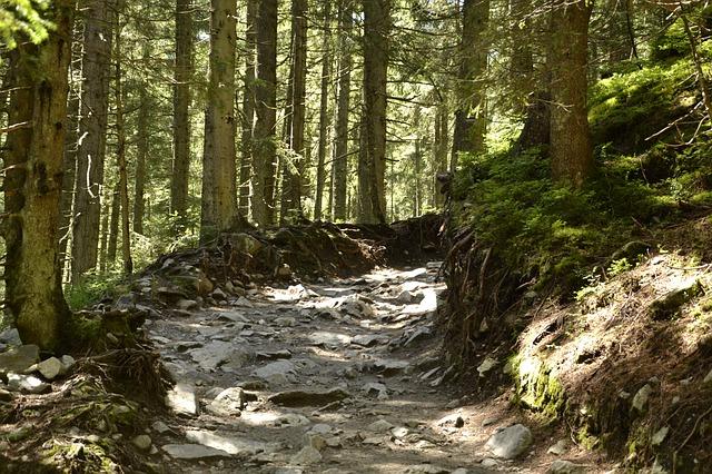 Co zrobić żeby dobrze się czuć na wakacjach w górach?